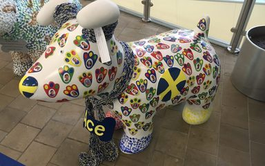 Ace our Great North Snowdog