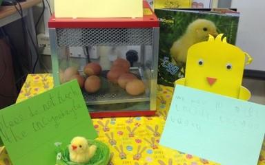 Chick, Chick Chicken!