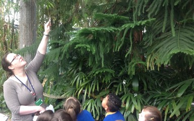 Rainforest Adventures at Sunderland Winter Gardens