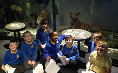 Animal Explorers In Year 3!