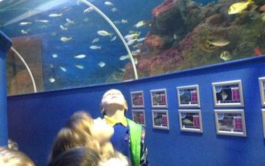Our Trip to The Blue Reef Aquarium