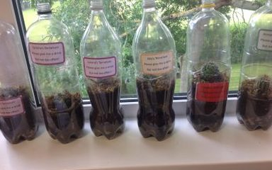 Terranium Making in Year 4