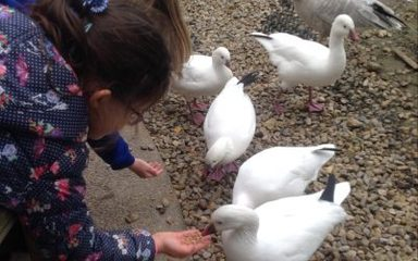 Year 2's visit to WWT Washington