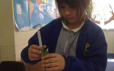 Measuring plants