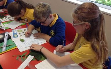 Year 6 Identifying Leaves