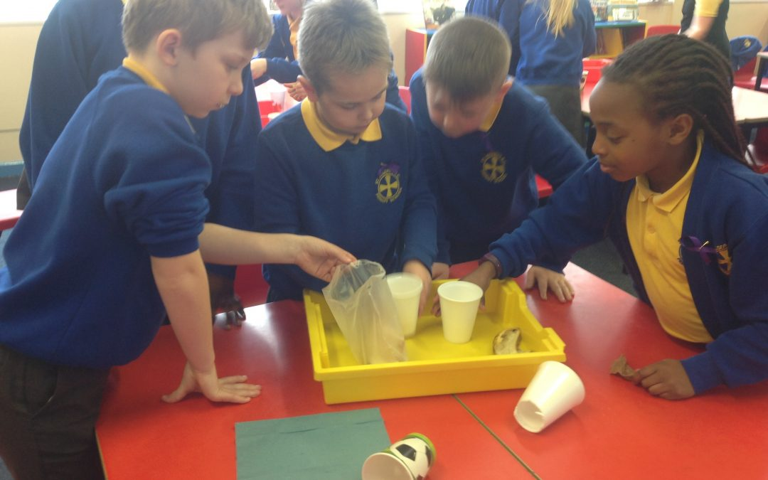 Year 4 – the digestive system