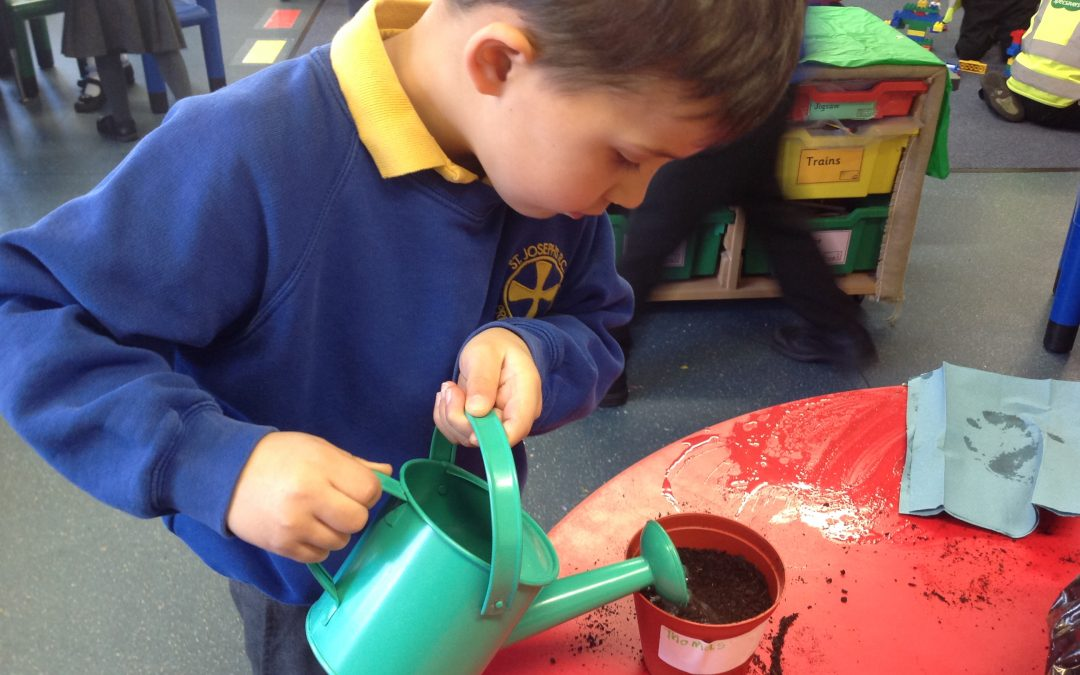 Beansprout Planting in Reception Class