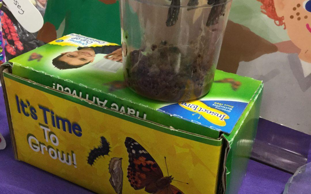 Caterpillar update….