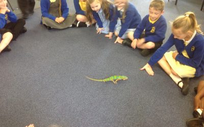 Meeting George the Chameleon